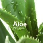 Remedies Aloe Vera